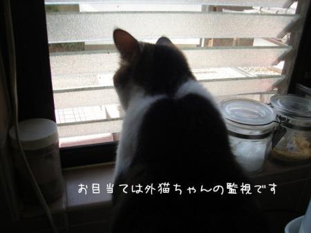2007.8.24.2.jpg