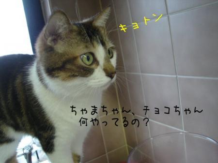 2007.9.1.2.jpg