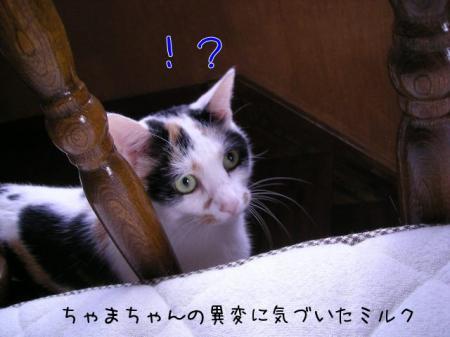 2007.9.17.3.jpg