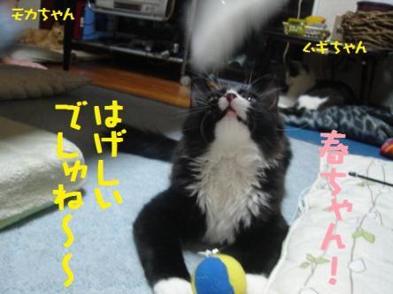 ぽっぽちゃん
