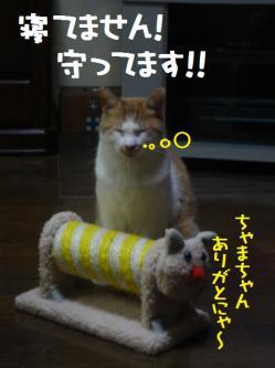 ちゃま&ボア