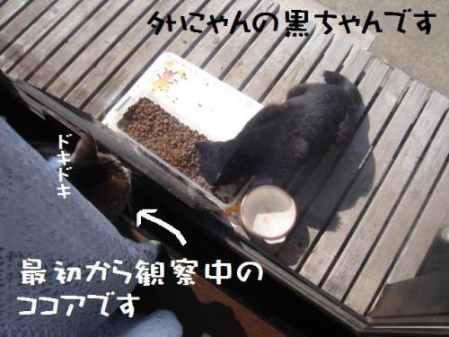 黒ちゃん&ココア