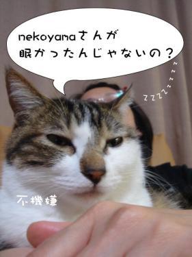 ココア&nekoyama