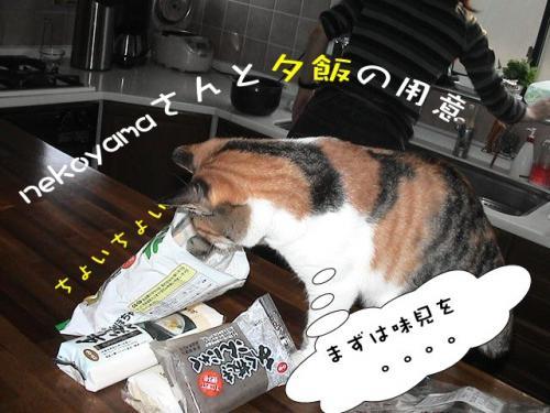 チョコ&nekoyama
