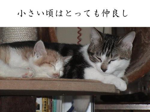 ちゃま&ココア