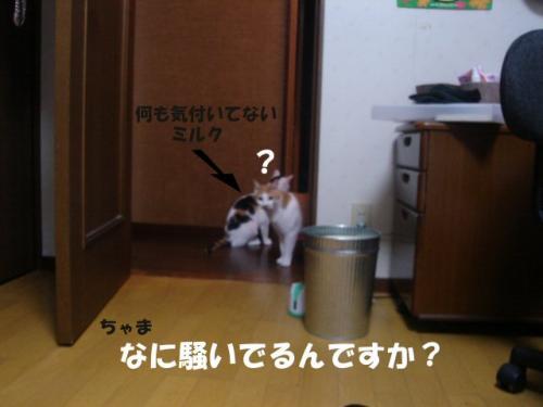 ミルク&ちゃま