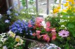 110622-03ベランダの花たち-