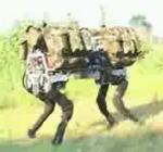 Robotic Mule