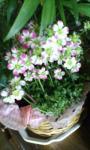 小さなお花♪