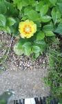 サボテンの花^m^