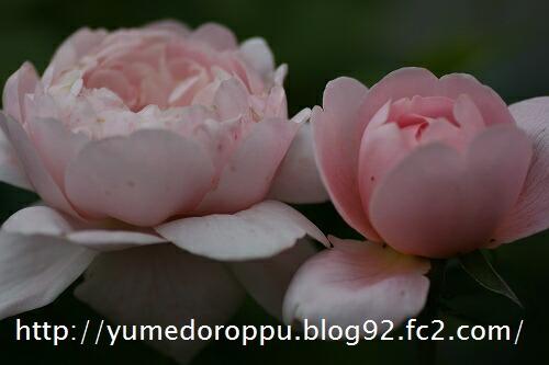 20070512170146.jpg