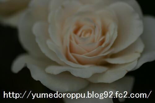20070515213756.jpg