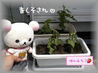 ちこちゃんの観察日記2011★9★-2