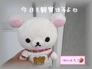 ちこちゃんの観察日記2011★9★-1