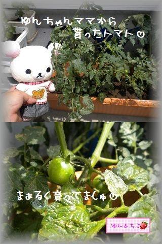 ちこちゃんの観察日記2011★9★-3