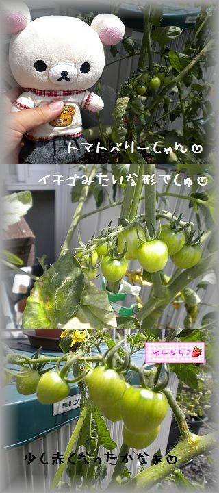 ちこちゃんの観察日記2011★9★-5