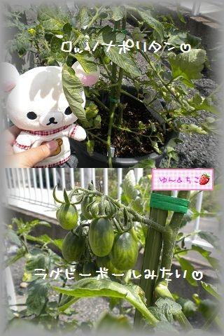 ちこちゃんの観察日記2011★9★-6