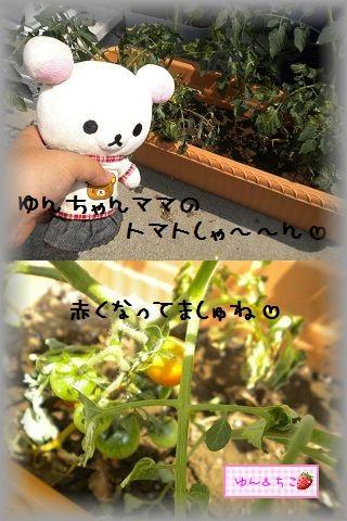 ちこちゃんの観察日記2011★10★赤くなってましゅね-5
