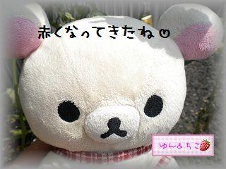 ちこちゃんの観察日記2011★10★赤くなってましゅね-3