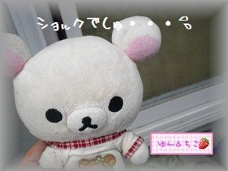 ちこちゃんの観察日記2011★12★ショック。。。。-1