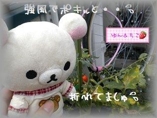 ちこちゃんの観察日記2011★12★ショック。。。。-2