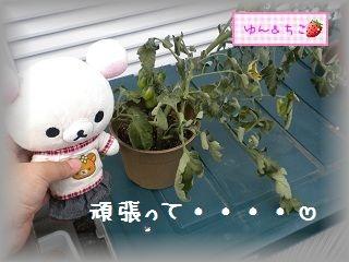 ちこちゃんの観察日記2011★12★ショック。。。。-3