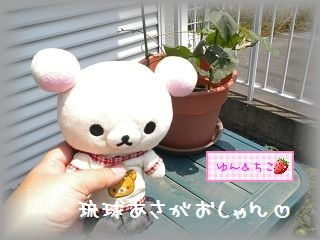 ちこちゃんのあさがお観察日記★5★急成長~♪-4