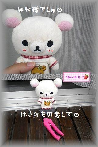 ちこちゃんの観察日記2011★14★初収穫-1