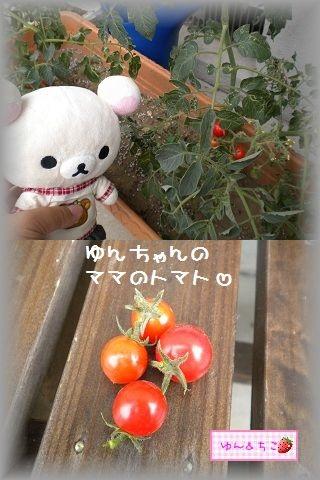 ちこちゃんの観察日記2011★14★初収穫-3