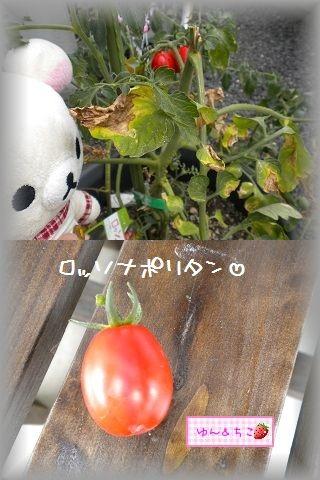 ちこちゃんの観察日記2011★14★初収穫-2