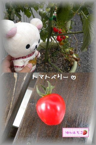 ちこちゃんの観察日記2011★14★初収穫-4