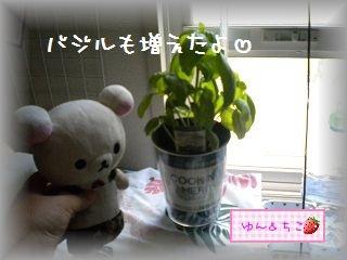 ちこちゃん日記★103★ちこが悲しんでいたら・・・-5