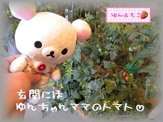 ちこちゃん日記★104★みんな避難でしゅ♪-2