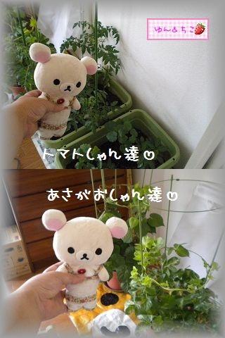 ちこちゃん日記★104★みんな避難でしゅ♪-5