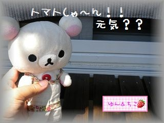 ちこちゃんの観察日記2011★15★つまみ食いでしゅ-1