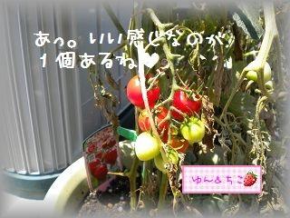ちこちゃんの観察日記2011★15★つまみ食いでしゅ-2