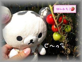 ちこちゃんの観察日記2011★15★つまみ食いでしゅ-3