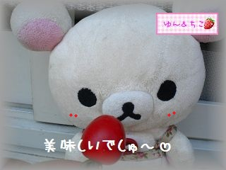 ちこちゃんの観察日記2011★15★つまみ食いでしゅ-4