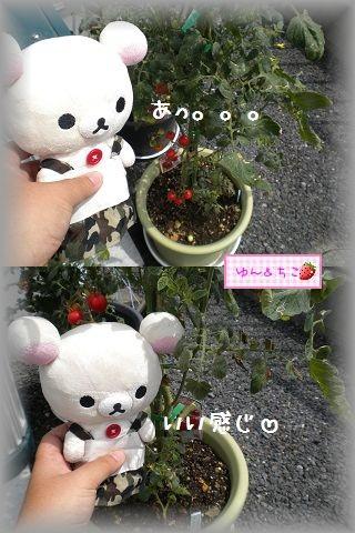 ちこちゃんの観察日記2011★16★少しずつ収穫and more…-2