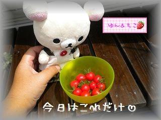 ちこちゃんの観察日記2011★16★少しずつ収穫and more…-3
