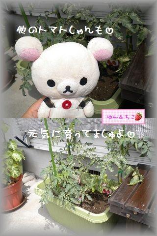 ちこちゃんの観察日記2011★16★少しずつ収穫and more…-4
