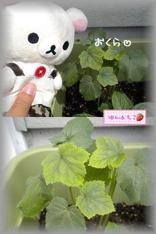 ちこちゃんの観察日記2011★16★少しずつ収穫and more…-5