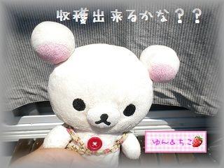 ちこちゃんの観察日記2011★17★収穫量が多くなったよ~-1