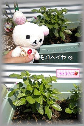 ちこちゃんの観察日記2011★17★収穫量が多くなったよ~-3