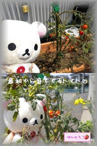 ちこちゃんの観察日記2011★17★収穫量が多くなったよ~-5
