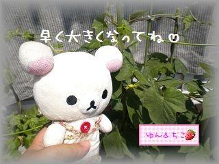 ちこちゃんのあさがお観察日記★14★大きくなってるよぉ~-3