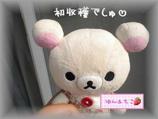 ちこちゃんの観察日記★18★モロヘイヤ初収穫♪-1