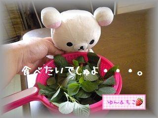 ちこちゃん日記★108★ネバネバだいしゅき♪-1