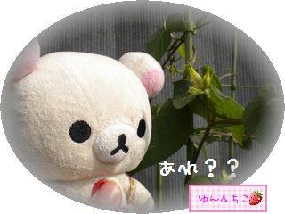 ちこちゃんのあさがお観察日記★17★新事実発覚♪-2