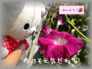ちこちゃんのあさがお観察日記★18★つぼみ急成長♪-2